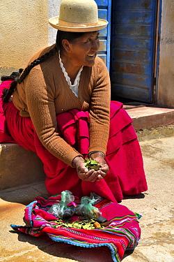 Aymara women with coca leaves (Erythroxylum coca) Lake Titicaca, Bolivia.