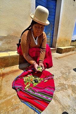Aymara woman with coca leaves (Erythroxylum coca) Lake Titicaca, Bolivia.