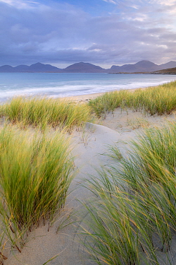 Sand dunes, marram grass (Ammophila arenaria) and beach at sunrise, Luskentyre, Isle of Harris, Scotland, UK. October 2018