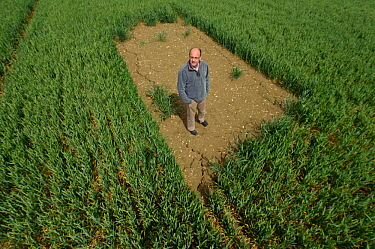 Farm manager Chris Bailey standing in skylark plot in Winter wheat crop, RSPB Hope Farm reserve, Cambridgeshire, England, UK, May 2011. Model released. 2020VISION Book Plate.