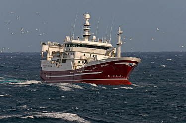 The pelagic trawler 'Research' fishing for mackerel and attended by a flock of Northern gannets (Morus bassanus) close to the Shetland Isles, Scotland, UK, October 2011. 2020VISION book plate.