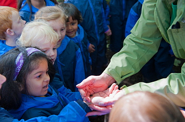Children from Rowley View Nursery School exploring small creatures in the Moorcroft Environmental Centre Forest School, Moorcroft Wood, Moxley, Walsall, West Midlands, July 2011. Model released.