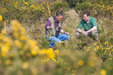 Alex Cruickshank of the Hampshire Wildlife Trust and Ornithologist, John Eyre assessing habitat suitability for Woodlark (Lullula arborea) and other bird species, Caesar's Camp, Fleet, Hampshire, Engl...