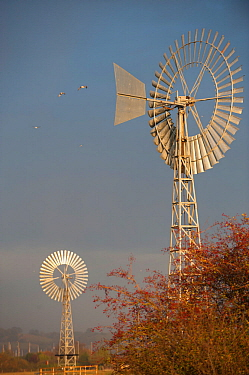 Two wind pumps, used for pumping water, West Canvey Marshes RSPB reserve, Canvey Island, Essex, England, UK, November.