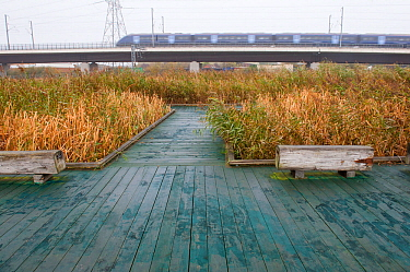 Visitor walkway at Rainham Marshes RSPB reserve with train passing in the background, Essex, England, UK, November