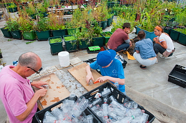 Man and boy cutting up plastic bottles to make bird scarers in a community vegetable garden on the roof of Budgens Supermarket, Food from the Sky initiative, Crouch End, London, England, UK, August 20...
