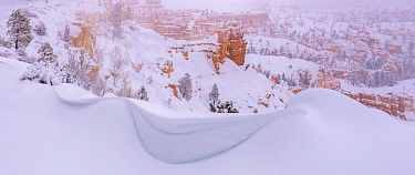 Winter snow storms cause wind-blown drifting along the canyon rim, Bryce Canyon National Park, Utah, USA, January.