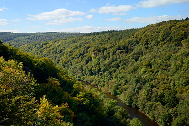 Forest of Dean and River Wye overview from Symond's Yat East, with primarliy deciduous trees, close to sites for Pine Marten (Martes martes) releases by the Forest of Dean and River Wye Pine Marte...