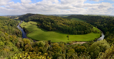 Forest of Dean and River Wye overview from Symond's Yat Rock, with primarliy deciduous trees, close to sites for Pine Marten (Martes martes) releases by the Forest of Dean and River Wye Pine Marte...