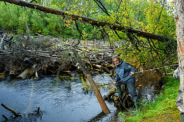 Man holding onto rope on the shore of the Lena River, nearly blocked with logs, Baikalo-Lensky Reserve, Siberia, Russia. August 2018.
