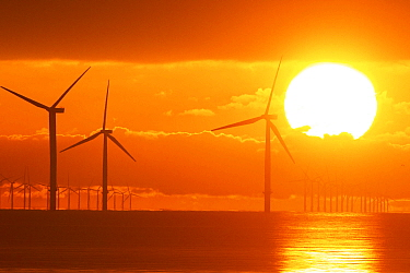 Sunrise over offshore wind turbine farm, Essex, England, UK, December.