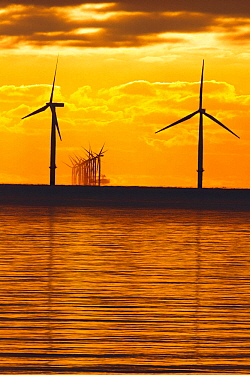Dawn over offshore wind turbine farm, Essex, England, UK, December.