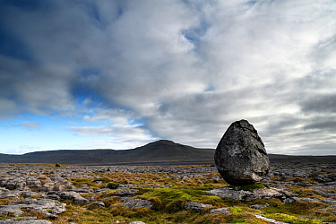Glacial erratic of Silurian age sandstone, perched upon youger Carboniferous age limestones. The limestones form a limestone pavement with the hill Ingleborough in the background. Whernside, Yorkshire...