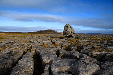 A glacial erratic of Silurian age sandstone, perched upon younger Carboniferous age limestones. The limestone forms a limestone pavement with the hill , Whernside, Yorkshire, England, UK.