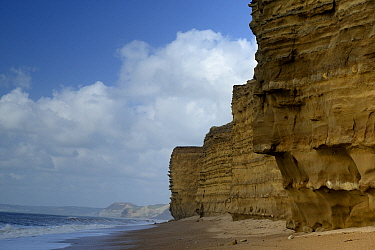 Wave cut notch at the base of a sea cliff, Burton Bradstock, Dorset, UK. The notch is eroded at beach level in cliffst of Jurassic, Bridport Sandstone. The notch will grow to a depth where the overlyi...