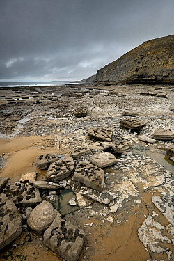 A wave-cut platform in Jurassic age, Liassic limestones (Blue Lias). Jointing and erosion patterns can be seen that have contributed to the break-up of the scattered boulders. Southerndown, South Glam...