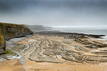 Several faults cutting through Jurassic age, Liassic Limestones (Blue Lias) near Southerndown, South Glamorgan Heritage Coast, Wales, UK. September. The faults can be seen displacing the bedding plane...
