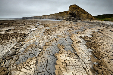 Bedding planes and joint network in Jurassic age Blue Lias limestone and shale exposed at low tide at Nash Point, South Glamorgan Heritage Coast, Wales, September 2017.