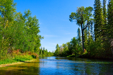 Landscape of the Lena River and surrounding taiga, Baikalo-Lensky Reserve, Siberia, Russia. August 2018.