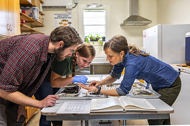 Christina Romagosa (right), Research Assistant Professor, University of Florida and her team of Python researchers looking through over the stomach contents of different snakes including invasive Burm...