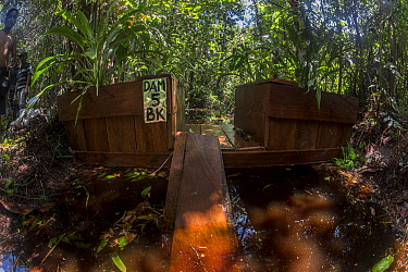 One of the dams constructed by the local field staff of the Borneo Nature Foundation in the canals in the Sabangau (peat-swamp) Forest. These are made to combat forest fires. Central Kalimantan, Indon...