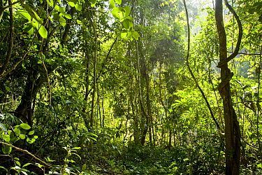 Shrubs, trees and lianas in tropical rainforest. Xishuangbanna,Yunnan Province, China.