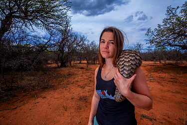 Vet carrying an orphaned Temminck's ground pangolin (Smutsia temminckii) on an evening forage to teach the young animal to find ants during its rehabilitation at the Rhino Revolution facility in S...