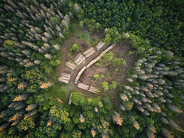 Aerial view of clearing with felled logs in Bialowieza Forest UNESCO World Heritage Site, Poland. Highly commended in the Wildlife Photojournalism Category of the Wildlife Photographer of the Year Awa...