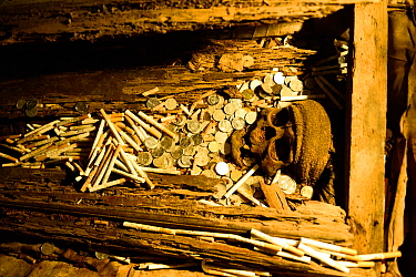 Skull, coins and bones in burial area in cave, Toraja cemetery. The Toraja culture of West and South Sulawesi revolves around death with funeral ceremonies an important part of daily life. Indonesia....