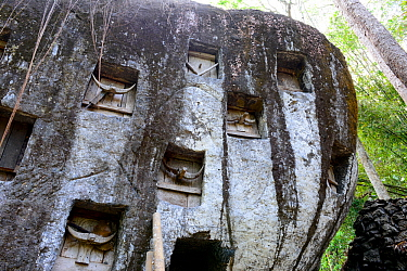 Toraja cemetery inside caves and rock walls, Tana Toraja. Toraja is an ethnic group in West and South Sulawesi. The culture revolves around death with funeral ceremonies an important part of daily lif...