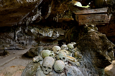 Skulls inside cave of Toraja cemetery. The Toraja culture of West and South Sulawesi revolves around death with funeral ceremonies an important part of daily life. Indonesia. 2015.