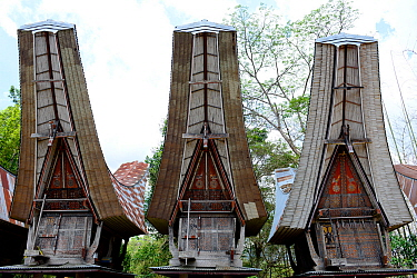 Traditional houses in Tana Toraja village, South Sulawesi, Indonesia. 2015.