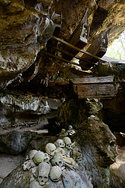 Skulls and coffins in rock wall and caves of Toraja cemetery. The Toraja culture of West and South Sulawesi revolves around death with funeral ceremonies an important part of daily life. Indonesia. 20...