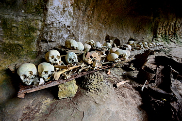 Skulls and bones in cave, Toraja cemetery. The Toraja culture of West and South Sulawesi revolves around death with funeral ceremonies an important part of daily life. Indonesia. 2015.