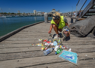 Earthcare St Kilda volunteer on jetty with items from litter pick around Little penguin (Eudyptula minor) breeding colony. Litter includes fishing bait bags, plastic bags, fishing lines, coffee cups a...