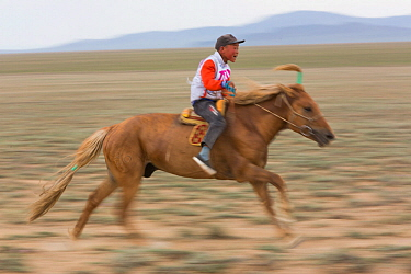 Boy racing young horse during Naadam festival. Great Gobi B Strictly Protected Area, Mongolia. August 2018.