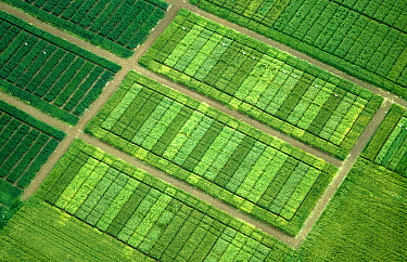 Aerial view of Cereal crop variety trials plots to test differences between varieties such as yield and disease resistance.