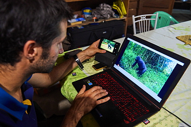 Veterinarian from Beauval Zoo observing camera trap footage of Western lowland gorilla (Gorilla gorilla gorilla) female following reintroduction through Gorilla Protection Project. Bateke Plateau Nati...