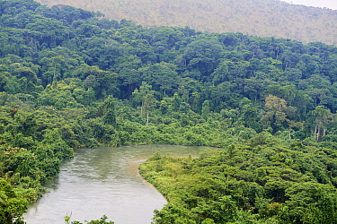 Mpassa river and Bateke Plateau National Park, aerial view. Site for reintroduction of two female Western lowland gorilla (Gorilla gorilla gorilla) from Beauval zoo through Gorilla Protection Project....