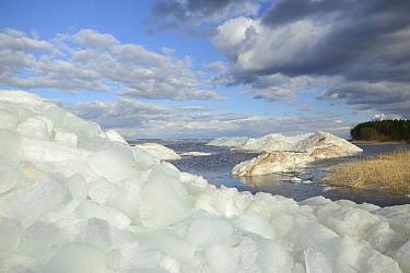 Wind-blown lake ice piled up near shore, Lake Peipsi, Estonia. April 2018.
