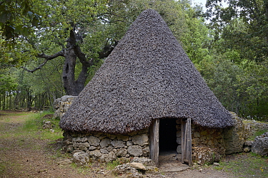 Traditional shepherd's hut, a pinetta / barracu. At forest edge, Bau Lassa, near Ulassai, Sardinia, Italy. May 2018.