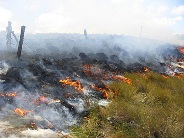 Paramo fire, set to promote new shoots for cattle grazing. Canar, Andes, Ecuador.