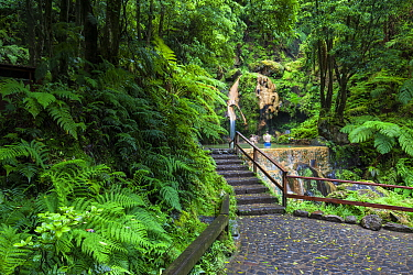 Path through laurisilva forest to pool, two people bathing. Natural Monument of Caldeira Velha, Ribeira Grande, Sao Miguel Island, Azores, Portugal. 2019.