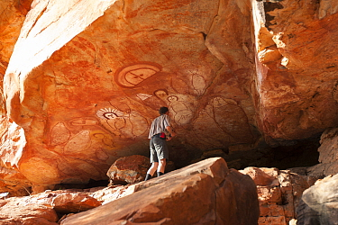 Tourist looking at Wandjina style Aboriginal rock art, depiction of people and fish. Raft Point, Doubtful Bay, The Kimberley, Western Australia. 2016.