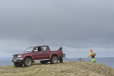 Man preparing to abseil to collect seabird eggs from Skoruvikurbjarg cliffs, Langanes Peninsula, Iceland. May 2018.