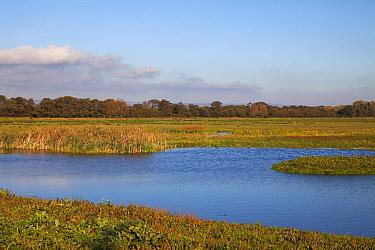 Pools and grazing land. Catcott Lows Nature Reserve, near Edington, Somerset Levels, England, UK. October 2018