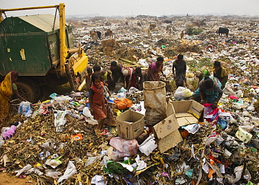 People picking through rubbish on landfill site, residents of the site. Guwahati, Assam, India. 2009.