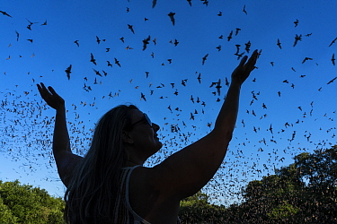 Woman with arms in air enjoying emergence of millions of Mexican free-tailed bats (Tadarida brasiliensis) at dusk. Bracken Bat Cave, San Antonio, Texas. June 2016.
