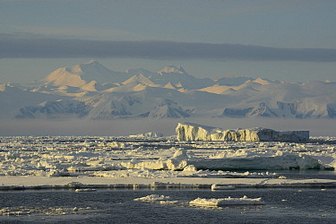 Icebergs and sea ice close to Cape Adare, Trans Antarctic mountains in distance. East Antarctica. January 2018.
