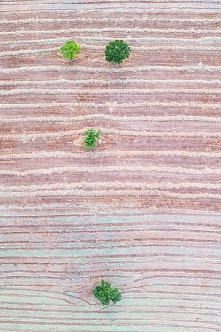 Cut agricultural field with scattered trees, aerial view. Hornillastra, Merindad de Sotoscueva, Burgos, Castile and Leon, Spain. June 2019.